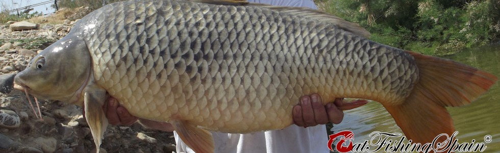 carpfishing in Spain