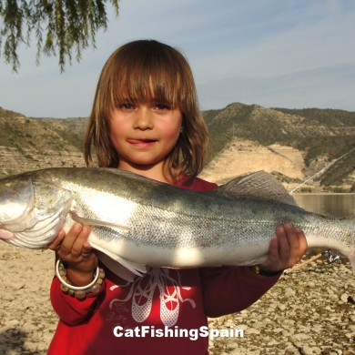 Zander fishing in Ebro